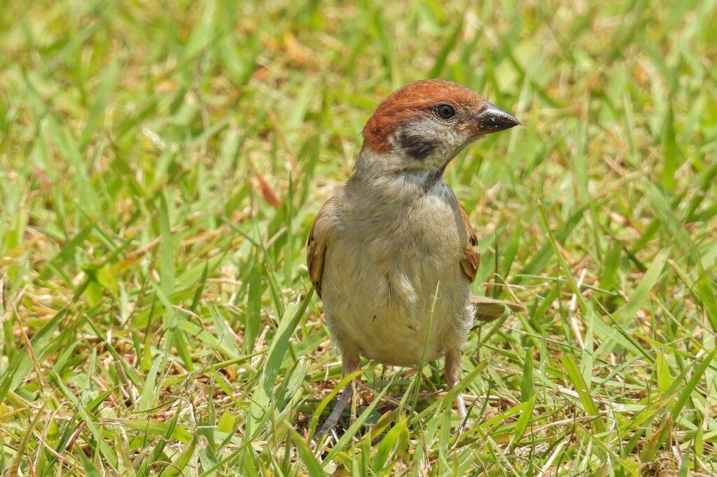 sparrow, bird, animal-6360143.jpg