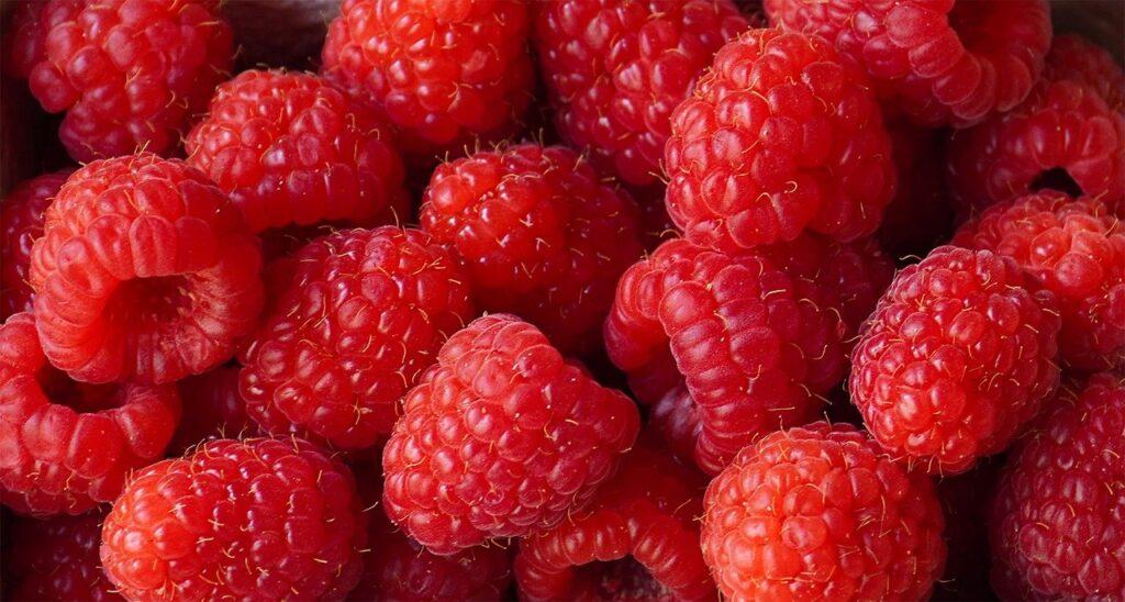raspberries, berries, fruit-6570751.jpg